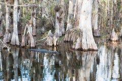 Foreste di Florida Fotografia Stock Libera da Diritti