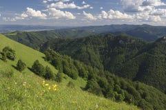 Foreste di Velka Fatra Immagine Stock