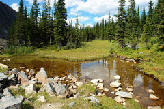 Foreste e prati alpini Fotografie Stock Libere da Diritti