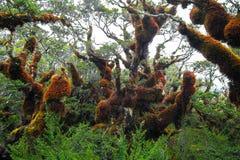 Foreste fertili della Nuova Zelanda immagine stock libera da diritti