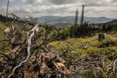 Foreste in montagne Fotografie Stock Libere da Diritti