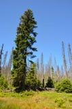 Foreste nel parco nazionale di Sumava Fotografia Stock Libera da Diritti