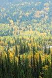 foreste River Valley Immagini Stock Libere da Diritti