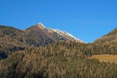 Foreste sempreverdi nella valle coperta di prima neve Il paesaggio delle dolomia in Immagini Stock