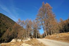 Foreste sempreverdi nella valle coperta di prima neve Il paesaggio delle dolomia in Fotografia Stock