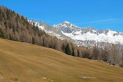 Foreste sempreverdi nella valle coperta di prima neve Il paesaggio delle dolomia in Fotografia Stock Libera da Diritti