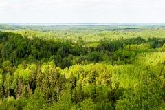 Foreste senza fine nel giorno soleggiato Immagini Stock