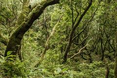 Foreste verdi del Madera Foresta tropicale nelle montagne sull'isola del Madera Immagine Stock