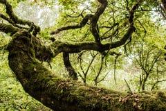 Foreste verdi del Madera Foresta tropicale nelle montagne sull'isola del Madera Fotografia Stock Libera da Diritti