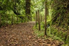 Foreste verdi del Madera Foresta tropicale nelle montagne sull'isola del Madera Immagine Stock Libera da Diritti