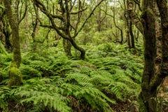 Foreste verdi del Madera Foresta tropicale nelle montagne sull'isola del Madera Fotografie Stock Libere da Diritti