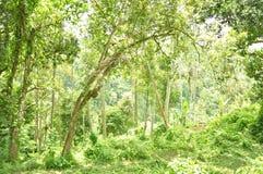 Foreste verdi a Ubud Fotografie Stock