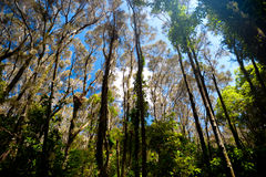 Forested area around Moonee Beach, Australia Stock Photo