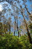 Forested area around Moonee Beach, Australia Royalty Free Stock Photography