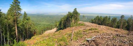 forested berg Arkivbild
