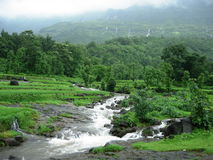 forested bergflod Royaltyfri Bild
