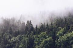 Forested berglutning i lågt liggande moln royaltyfria foton