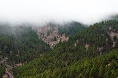 Forested berglutning i lågt liggande moln Tenerife Spanien arkivfoto