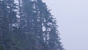 Forested cliff on a beach. Edge of a forested cliff on a beach stock footage