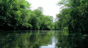 Forested flod som sett på vattenlinjen arkivbild