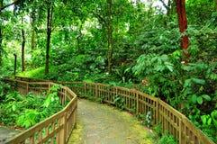 forested fridsam fridfull trail royaltyfri fotografi