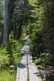Forested Hiking Trail Stock Photo