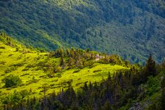 Forested hill of mountain ridge. Beautiful summer scenery Royalty Free Stock Image