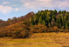 Forested hill in springtime Royalty Free Stock Photos