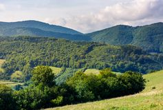 Forested hills of Carpathian mountains. Lovely mountainous landscape in summer Stock Images