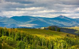 Forested hills of Carpathian mountains. Wonderful landscape in early autumn on a cloudy day. Pikui and Gostra mountain in the far distance Stock Photography