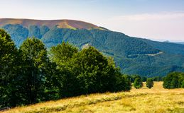 Forested hills of Carpathian mountains in summer. Apetska mountain in the distance Stock Photo