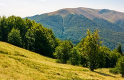 Forested hills of Carpathian mountains in summer. Apetska mountain in the distance Royalty Free Stock Images