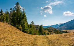 Forested hills of Carpathians in springtime. Poor scenery after winter storms Stock Photos
