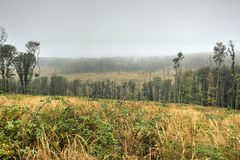 Forested Hills in Fog Royalty Free Stock Image