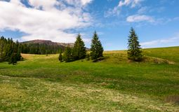 Forested hills and grassy meadows in springtime. Beautiful landscape of Borzhava mountain ridge with snowy tops in the distance royalty free stock photo
