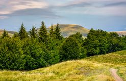 Forested hills and meadows of Svydovets ridge. Lovely summer landscape of Carpathian mountains in afternoon Royalty Free Stock Images