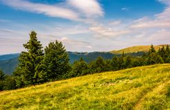 Forested hills and meadows of Svydovets ridge. Lovely summer landscape of Carpathian mountains in afternoon royalty free stock photo