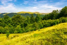 Forested hills and meadows of Svydovets ridge. Lovely summer landscape of Carpathian mountains in afternoon Royalty Free Stock Image