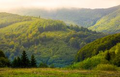 Forested hills in morning mist. Lovely mountainous landscape of Carpathians under low clouds Royalty Free Stock Photography