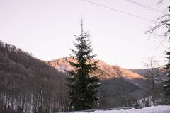 Forested hills in the morning. Mountains forested on a winter morning Royalty Free Stock Photography