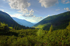 Forested Hills in Valley Stock Photos