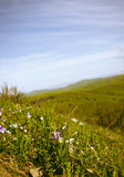 Forested Hills Valley Stock Photos