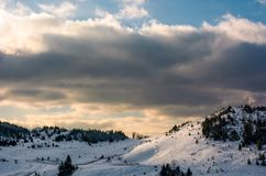 Forested hillside covered with snow Royalty Free Stock Photos
