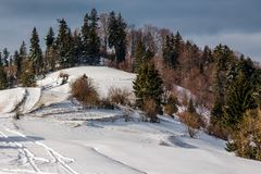 Forested hillside covered with snow Stock Images