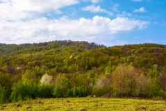 Forested hillside on a fine weather. Beautiful nature springtime scenery Stock Photography