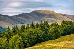 Forested hillside of Svydovets mountain ridge Stock Photography