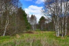 The forested, hilly landscape near Hartmanice, Sušice, Šumava, Czech Republic Royalty Free Stock Image