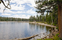 Forested lake shoreline Stock Photography