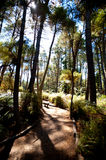 Forested Landscape near Rotorua, New Zealand Royalty Free Stock Photos