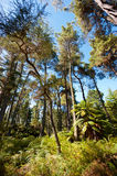 Forested Landscape near Rotorua, New Zealand Royalty Free Stock Photography